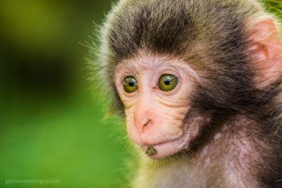 Monkey See Monkey Do, Kyoto