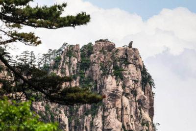 Monkey watching the Sea, China