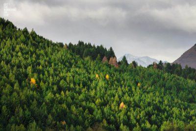 Mountain Pines, Queenstown