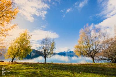 Fine Art Photography Print. Golden autumn leaves by the Lake. Lake Wanaka, New Zealand
