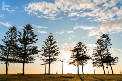 Fine Art Photography Print. Sunrise silhouettes of pine trees and man walking along Maroubra Beach