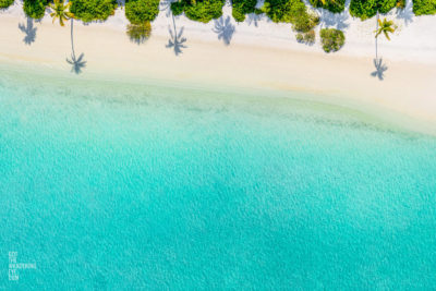 Aerial oceanscape of palm tree shadows on beautiful Maldivian Beach