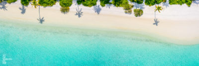 Panoramic aerial oceanscape of palm tree shadows on beautiful Maldivian Beach