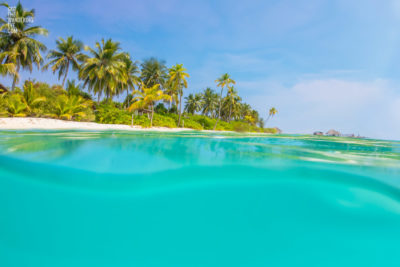 Underwater photograph looking back at the tropical palm trees and beautiful island of the Sirru Fen Fushi, Maldives