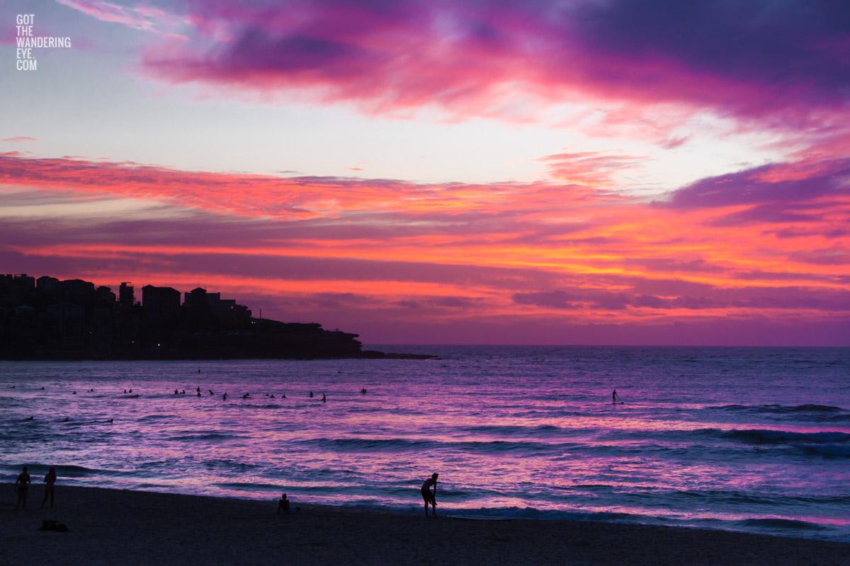 Spectacular pink sky sunrise looking towards Ben Buckler, Bondi Beach
