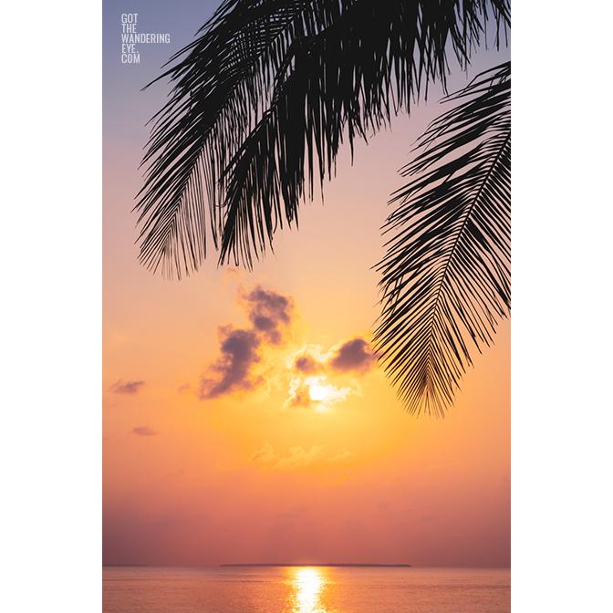 Gorgeous sunrise peeking through palm tree silhouette in the Maldives