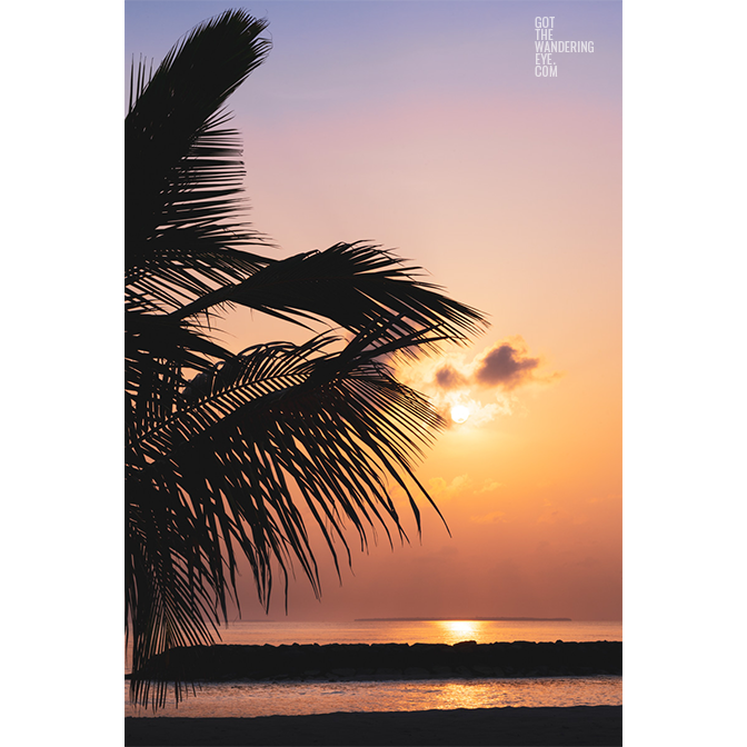 Sunrise over the Maldives with silhouette of palm tree