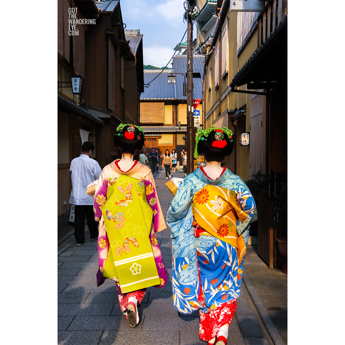 Maiko (apprentice geisha) walking the streets of gion in beautiful kimonos greeted by paparazzi