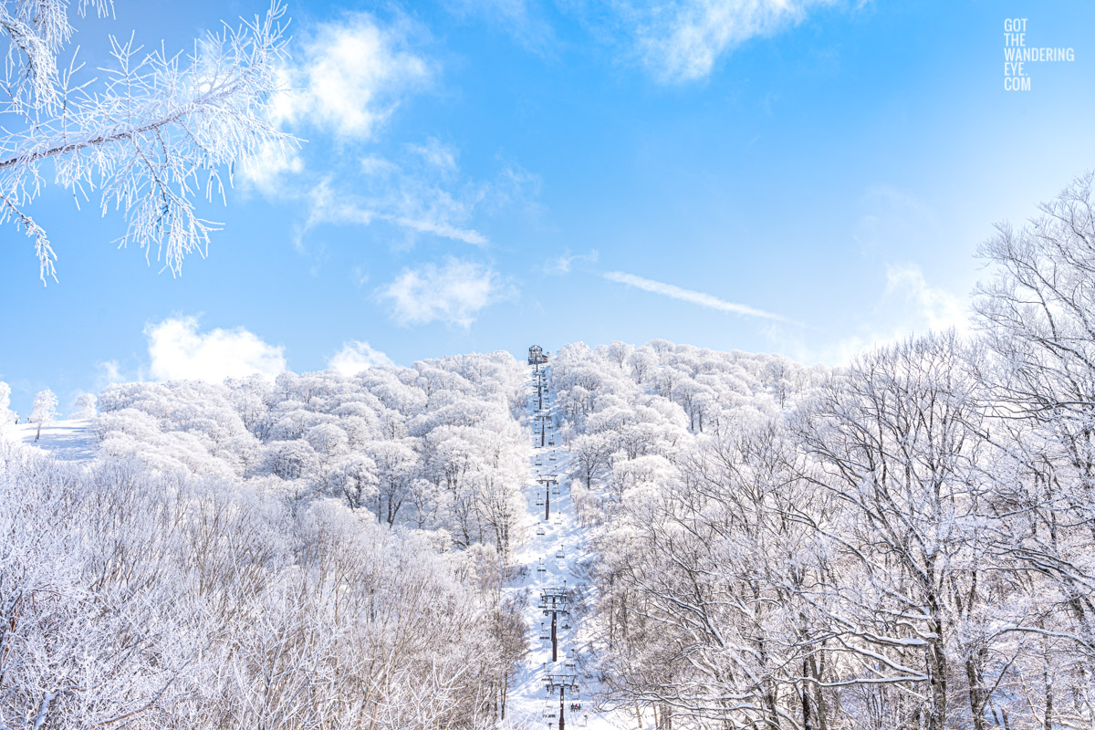Beautiful blue sky with snow covered trees looking up towards chairlift on Nozaw Onsen Snow Resort, Japan
