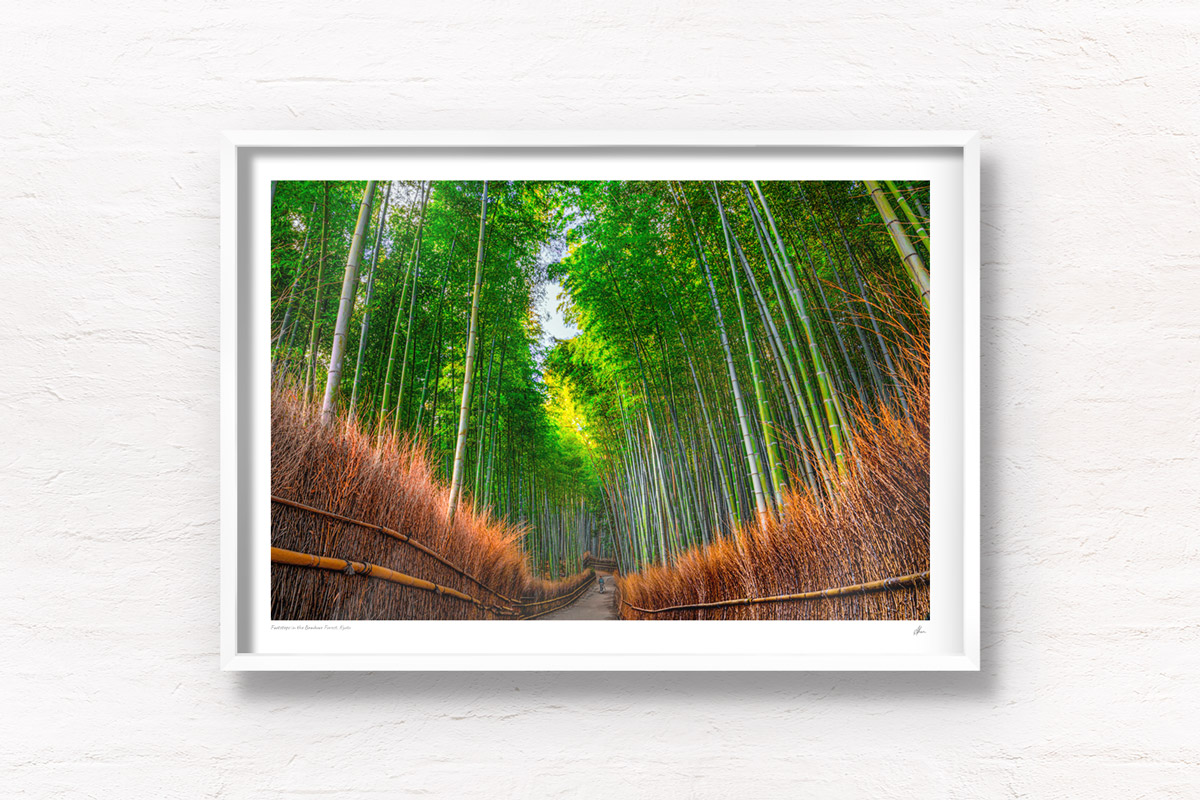 Woman in kimono enters the solitude and sanctuary of the Bamboo Forest in Arashiyama, Kyoto, Japan