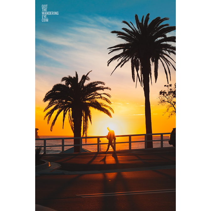 Swimmer walking past a stunning sunrise in between palm trees during sunrise at bronte beach. Sunrise, silhouette, summer
